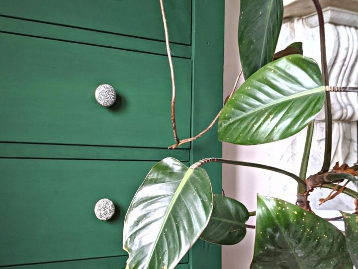 The Green Room: Interior Decorating with Plants