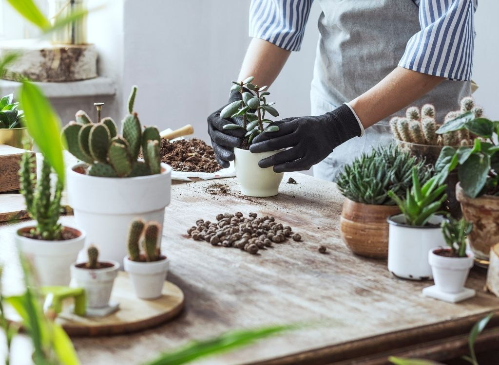 gardening 2 1 - Top 10 Lockdown Hobbies to Stave Off the 'Iso' Scaries